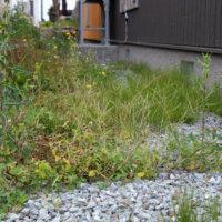 きれいなお庭を目指そう!「第一章 ガーデニングの天敵?雑草を知ろう」の画像