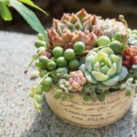 激安注文できる多肉植物の通信販売サイト3選!の画像