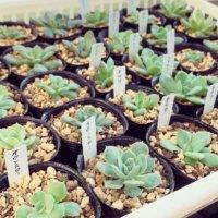 多肉植物の増やし方|ペットボトルを活用?簡単に増やせる3つの方法!の画像