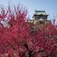 一生に一度は見てみたい!関西で有名な梅の花の名所はどこ?の画像