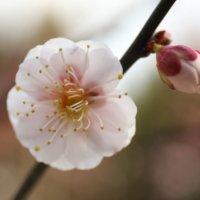 2月の誕生花|日別の花一覧と花言葉は?2月生まれの人に贈ろう!の画像