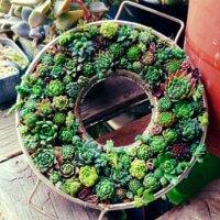 緑の多肉植物だけ使用!グリーンリースがおしゃれインテリアに?の画像