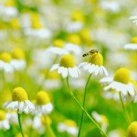 【4月の花】春のガーデニングを彩る人気の種類15選とは?の画像