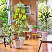 観葉植物をプレゼントしよう!引っ越し祝いや開店祝いにおすすめなのは?の画像