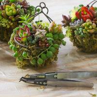 多肉植物の寄せ植えにおすすめのピンセット〜ワークショップレポート〜の画像
