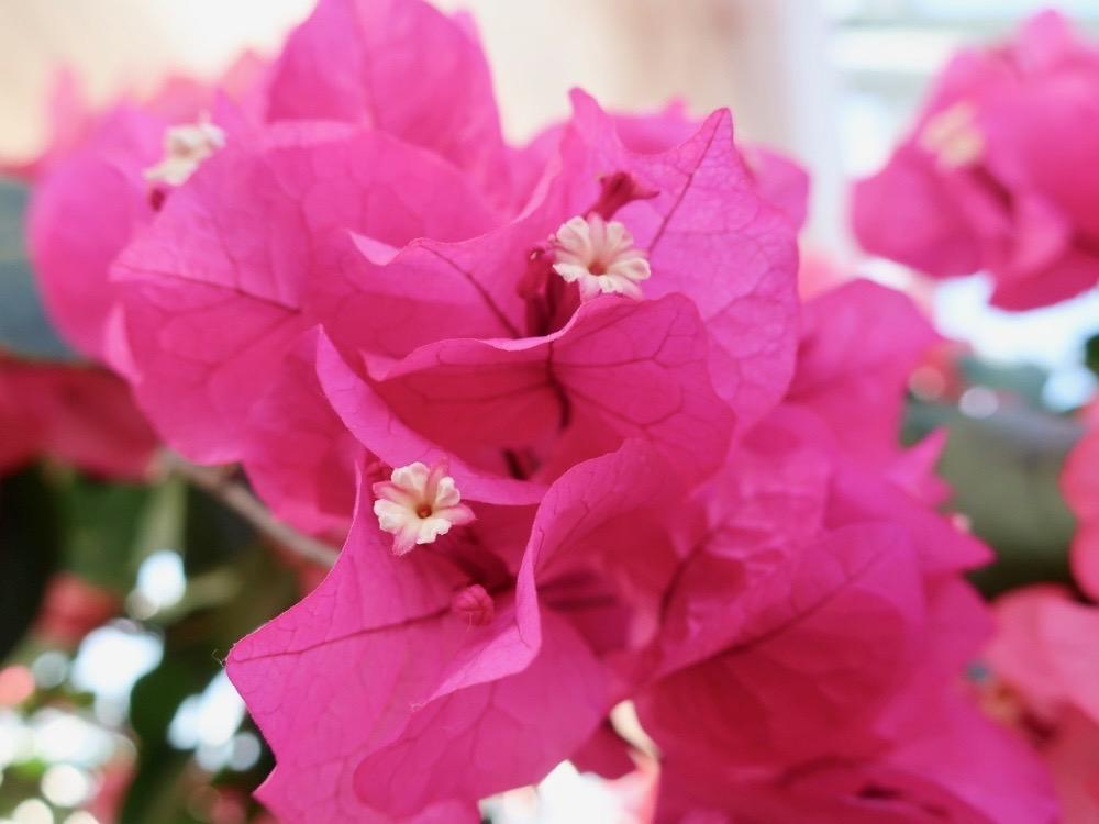 冬 に 咲く 花 の よう に 生き た あなた