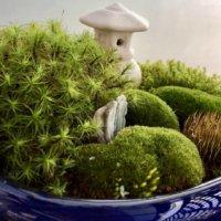 和のぬくもりに癒される!苔盆栽がつくりだす魅惑の世界とは?の画像