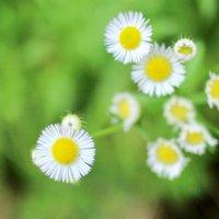 春の雑草図鑑|花の色別に名前や特徴をご紹介しますの画像