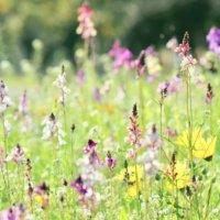育てたくなっちゃう?道端で健気に咲くかわいい雑草のお花とは?の画像