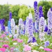 初夏の「5月の花」写真展|人気の種類や品種、特徴、開花時期は?の画像