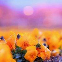 初恋・片思い・恋愛など「愛」の花言葉をもつ花10選|キュンとする意味は?の画像