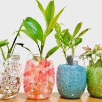 ハイドロカルチャーに植え替えよう!相性のいい観葉植物はどれ?の画像