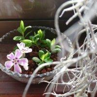 春の花をおうちで楽しむ!透明感が美しいガラスベースのアレンジとは?の画像