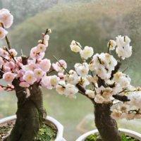 梅(ウメ)の種類|実がなる品種はどれ?花の開花時期はそれぞれ違う?の画像