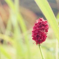 ワレモコウ(吾亦紅)の花言葉|種類や由来、アレンジメントの楽しみ方の画像