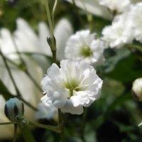 カスミソウの花言葉|色別の意味や由来、どの花とも相性が良い?の画像