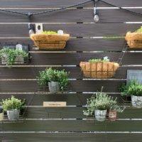 今週の人気『みどりのまとめ』5選! 我が家の植物まとめ などの画像