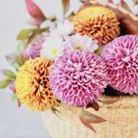 和室にも飾れる!「和風な花かごアレンジメント」の魅力とは?の画像