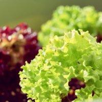 レタスの種類|リーフレタスなどの品種やそれぞれの栄養は?の画像