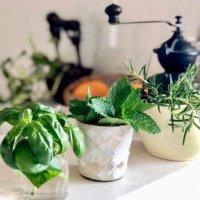 おうちの中でも育つ♪おすすめのキッチンハーブとレシピ案をご紹介!の画像