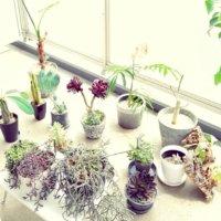 欲しいアイテムが見つかる!園芸グッズのオンラインショップ10店の画像