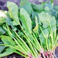 ほうれん草の病気・害虫|対策や予防、生理障害ってなに?の画像
