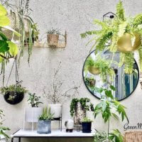 金運UP⤴︎風水的におすすめの観葉植物はどれ?どこに置くといいの?の画像
