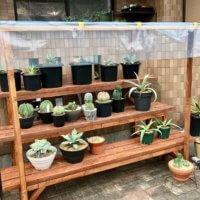 地植え・鉢植え別!絶対にやるべきガーデニング梅雨対策とは?の画像