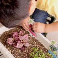 みんなの植物のある暮らしを見てみよう!「#おうち園芸」どう楽しんでる?の画像