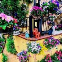 一軒家でも集合住宅でも!玄関前にお花をステキにかざるコツとは?の画像