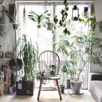 観葉植物のコバエ駆除方法!どんな予防対策をすれば発生しない?の画像