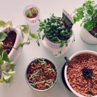 観葉植物の土|おすすめの種類や配合は?100均で買っても大丈夫?の画像