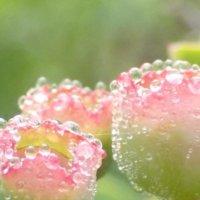 ブルーベリーの花言葉|怖い意味もあるの?花言葉の意味や、特徴などご紹介の画像