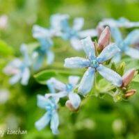 夏の花壇を涼しげに!暑さに強いさわやかカラーのお花10選の画像