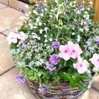 夏の寄せ植え|花の組み合わせのコツとおすすめの植物13選の画像