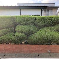 目隠しになる庭木|人気の種類は?メリット、デメリットはある?の画像