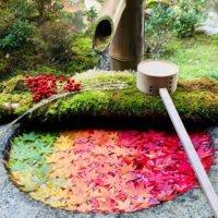 芸術の秋!道端にある紅葉した葉っぱで「落ち葉アート」を楽しもう!の画像
