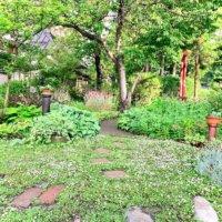 グランドカバーにおすすめの植物|駐車場や日陰、和風の庭にあうのは?の画像