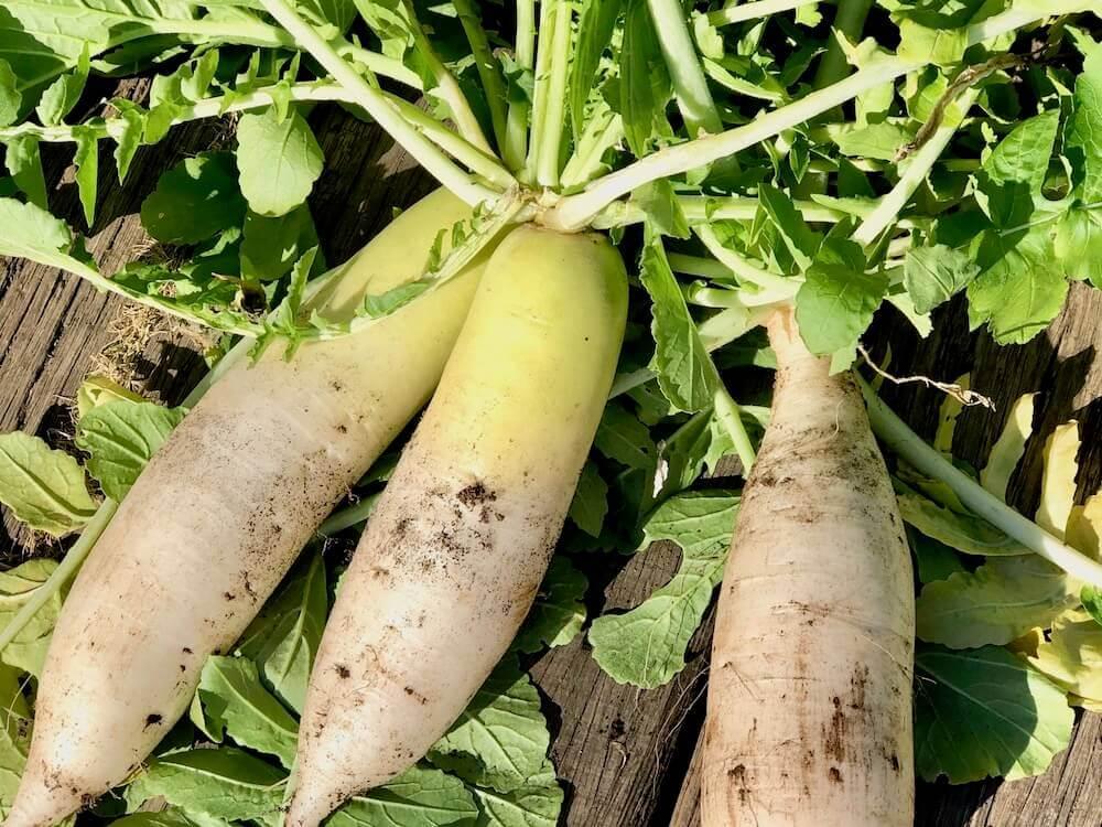 植える 野菜 夏