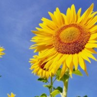 7月の花おすすめ12選!夏に咲く種類は?花壇やプランターで楽しめるのは?の画像