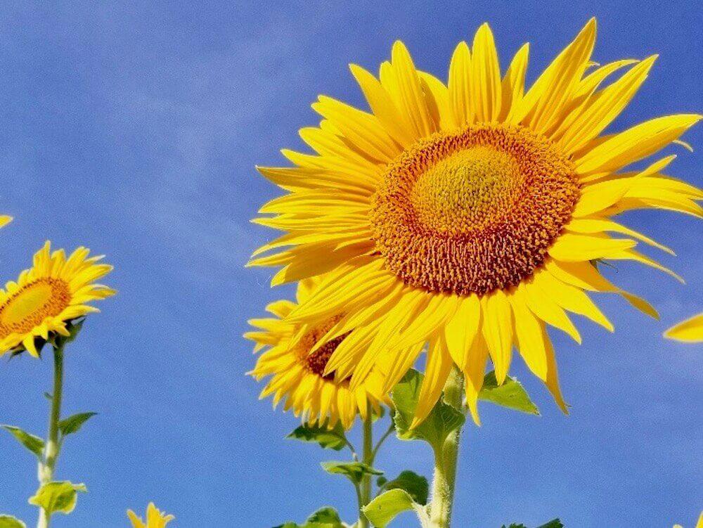 7月の花おすすめ12選!夏に咲く種類は?花壇やプランターで楽しめるのは?|🍀GreenSnap(グリーンスナップ)