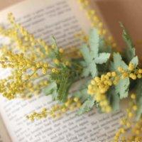 ミモザ(ギンヨウアカシア)の花言葉|色別だと怖い意味もある?プレゼントにおすすめ?の画像