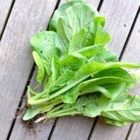 小松菜(コマツナ)の育て方|種まきから収穫までは何日?どんな栄養がある?の画像