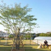 シンボルツリーの人気樹種25選!おすすめの常緑樹や低木はどれ?の画像