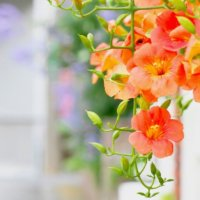猛暑の「8月の花」写真展|人気の種類や品種、特徴、開花時期は?の画像