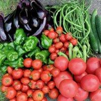 夏野菜を片付けるサインとは?8月中に家庭菜園を秋冬野菜に切り替えよう!の画像