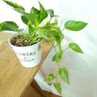 おしゃれな植木鉢|おすすめのサイズや陶器などの素材の種類は?の画像