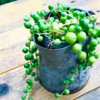 集中力UP効果も◎デスク周りで育てるのにおすすめの観葉植物とは?の画像