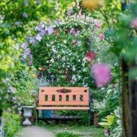 おしゃれな庭のデザイン!センスのいい庭づくりのコツとは?の画像
