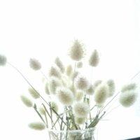 ラグラスの花言葉|花の特徴や種類、アレンジメントのおすすめは?の画像